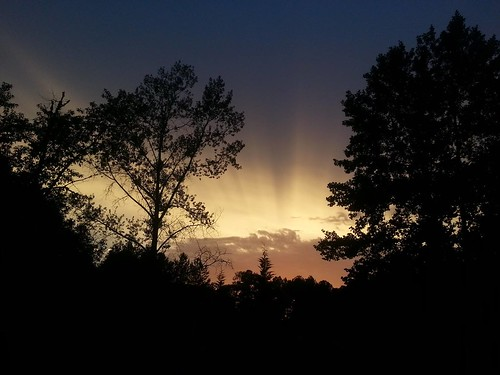 trees sunset silhouette nc afterstorm zebulon