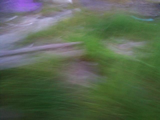 PIC_1384