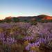 Blooming Karijini by Mark Wassell