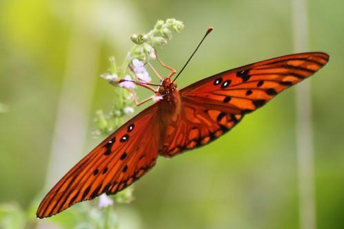 insect polkcountyflorida lakelandhighlandsscrub