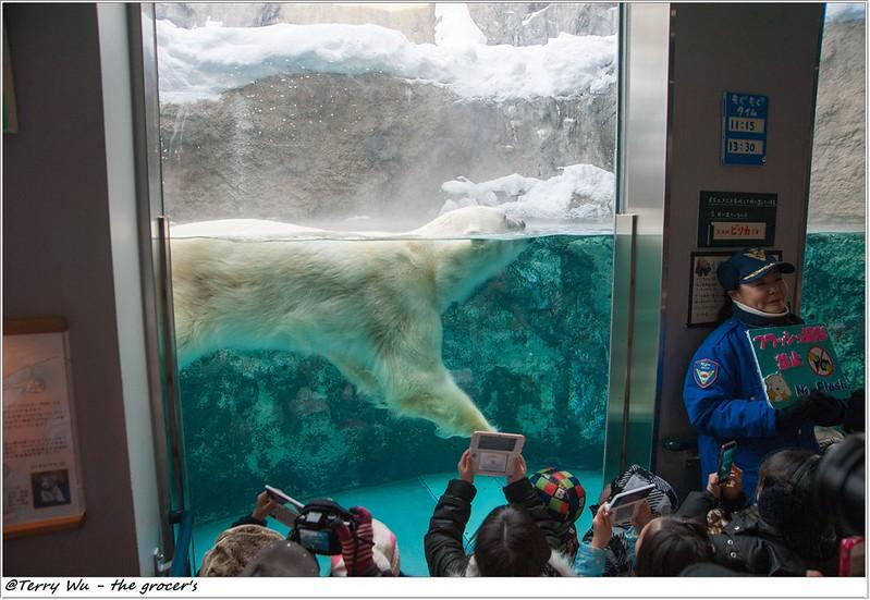 Day5 - 旭山動物園 - 企鵝散步-49