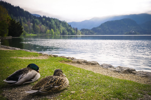 travel mountain lake water birds animal landscape duck europe day sony slovenia bled aviary radovljica sonya7
