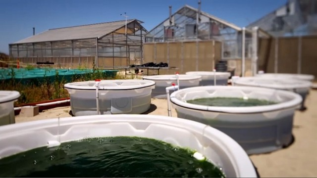heres-how-algae-biofuel-is-made-video-83630_1