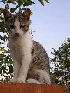 Sitting Kitten