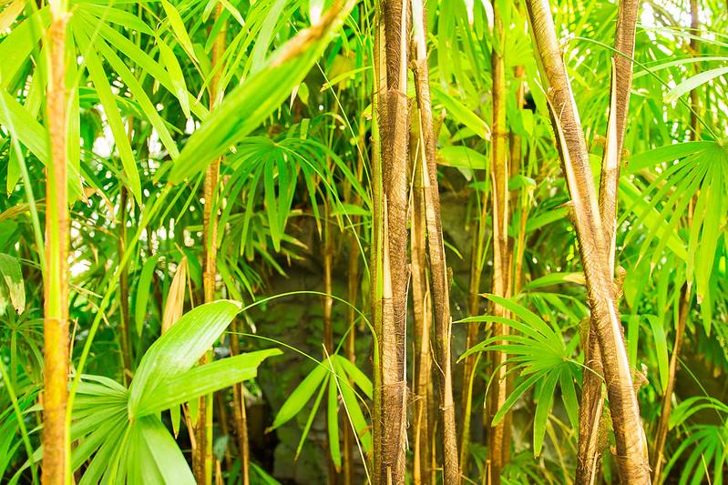 Botanical Conservatory_07