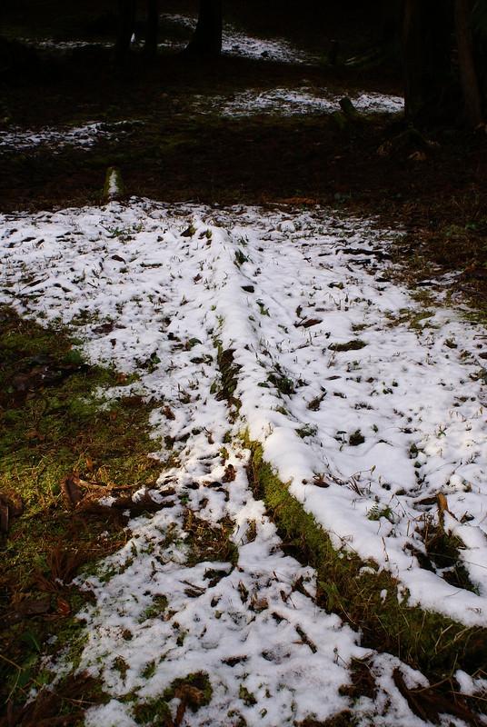 初冬に降る雪_200812