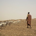 Vaccination and distribution of goats - Mali