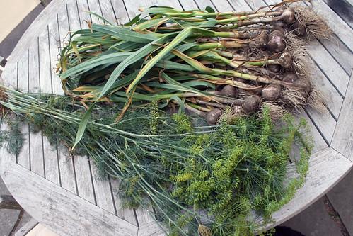 harvest 7-21-2014