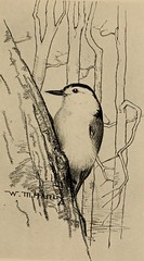 """Image from page 388 of """"Through the year with birds and poets [poems];"""" (1900)"""