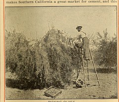 "Image from page 6 of ""Southern California farms and industries ... Santa Fe"" (1901)"