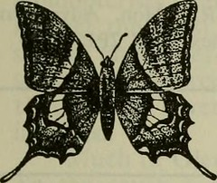 "Image from page 373 of ""The Entomologist's record and journal of variation"" (1890)"