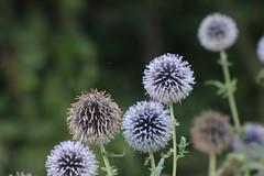 Greenwich Park flower garden