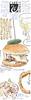 Bowes Museum - burger sm