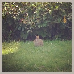 Say hello to my little friend. #bunny #homesweethome