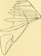 """Image from page 488 of """"Zeitschrift für wissenschaftliche Zoologie"""" (1912)"""