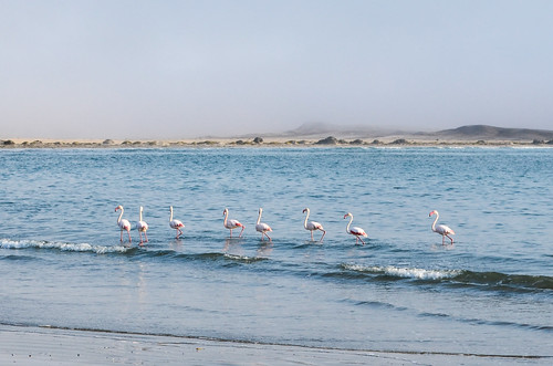 Flamingos at Diaz Point, Namibia
