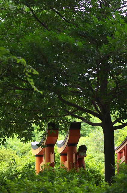 東京路地裏散歩 根津神社 2014年8月16日