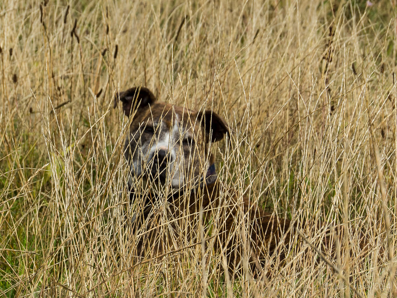 Jez in the long grass