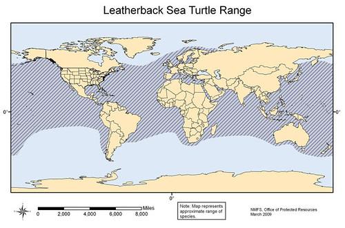圖片來源:NOAA,革龜分布圖。