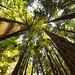 Muir Woods by Gary Burke.