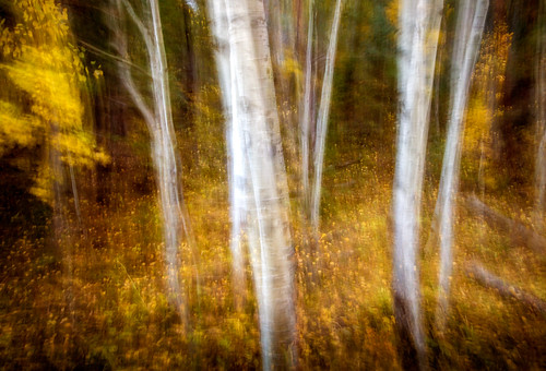 autumn blur color fall colorado handheld aspens icm intentionalcameramovement ptphoto lightroom5 pse12