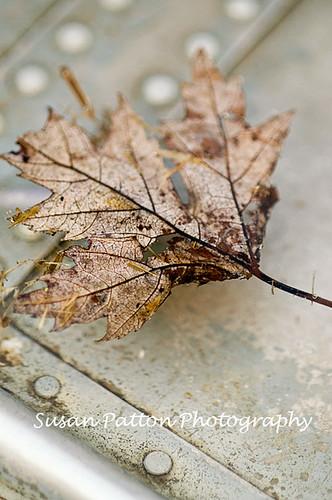 wcanoe_leaf