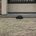 BlackSquirrel 2012-03-15 at 10-36-38