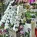 Orchids Stall