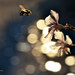 di fiore in fiore... by Fabiob74