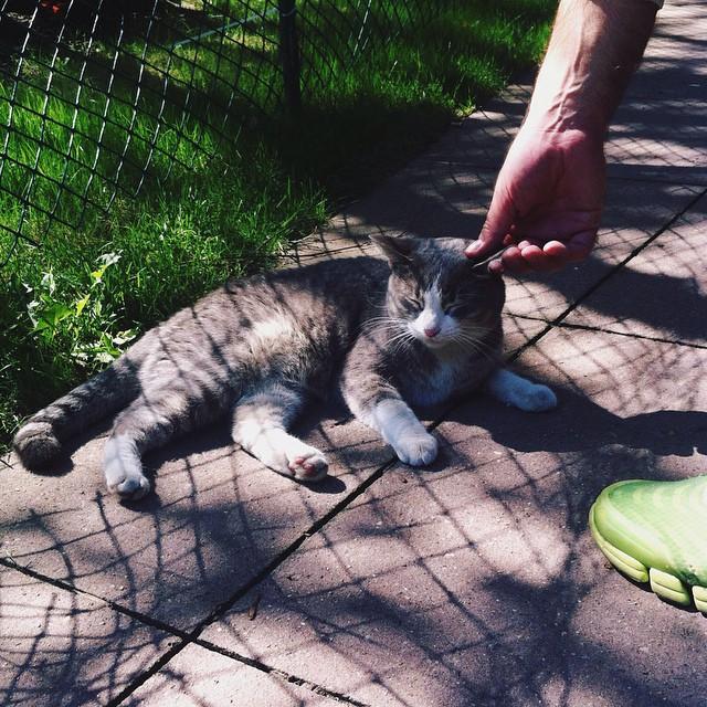 Met this little sweetie on the street  who liked a good ol ear rubbing.  #cat #cats #catsofinstagram #brooklyn #nyc #friend #sweetie #pratt #straycat