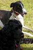 140525 Greyhound Extravaganza-0172