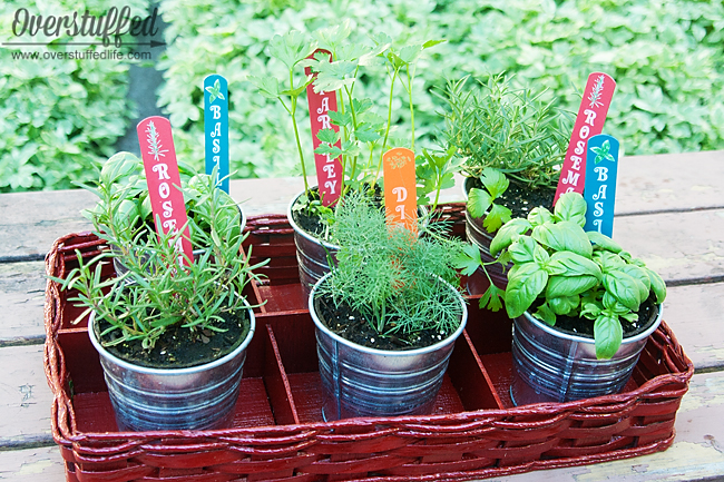 Make a small tabletop herb garden for your patio.