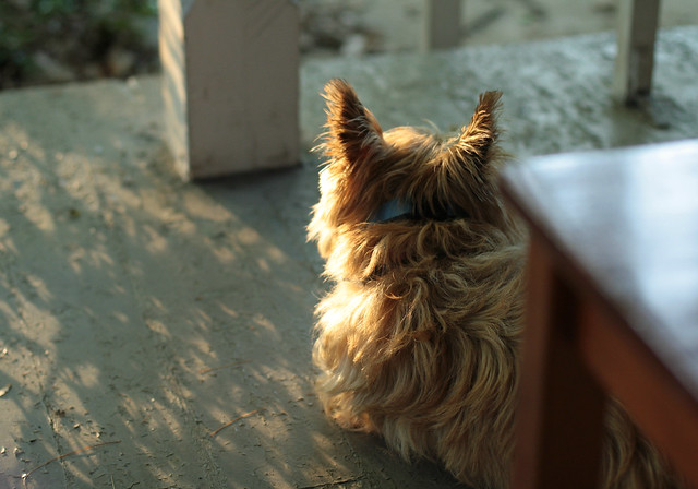 Harry On The Porch, Sunset II