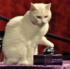 Acrocats - Circus Trick cats