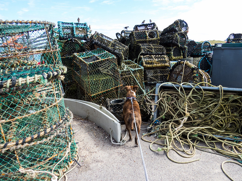 Jez investigates the lobster pots