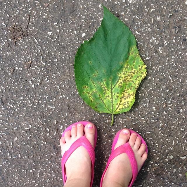 Cool leaf Selah found! #selahgram #fromwhereistand