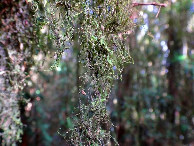 Plant life, Border Ranges NP