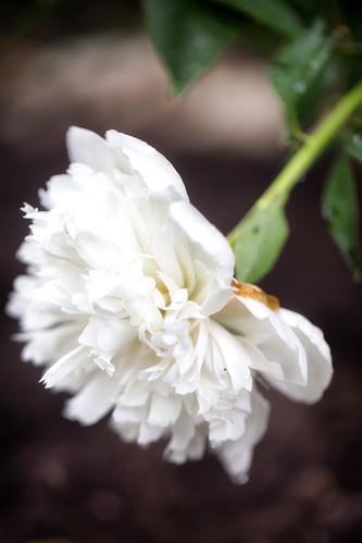06-14 flowers-3549-Edit