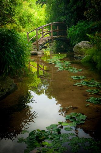nature austin garden texas natural orientalgarden zilkerpark zilkerparkbotanicalgarden