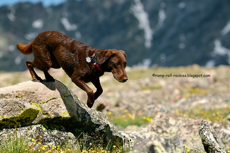 Leaping Lab in the Rockies
