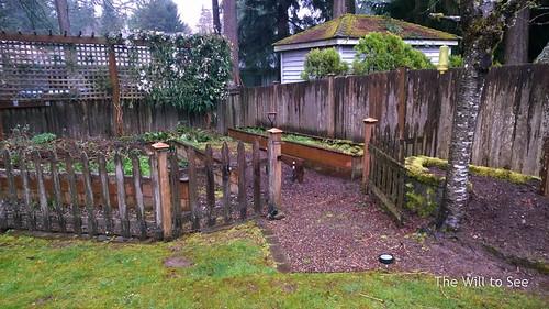 backyard start.jpg