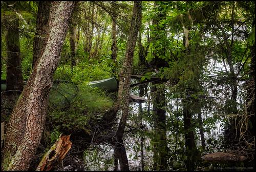 trees lake reflection water grass strand forest canoe shore skog bushes vatten träd kass sjö undergrowth buskar gräs kanot spegling refelktion purmo utterleden kalisjön kalijärv