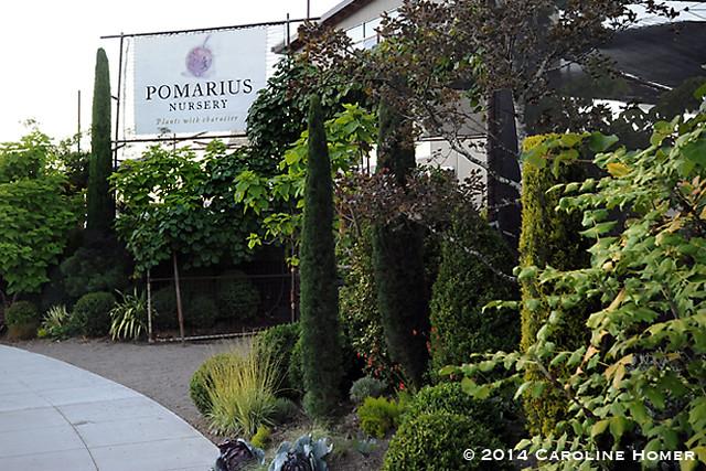 Pomarius Nursery