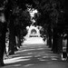 Small photo of Viale
