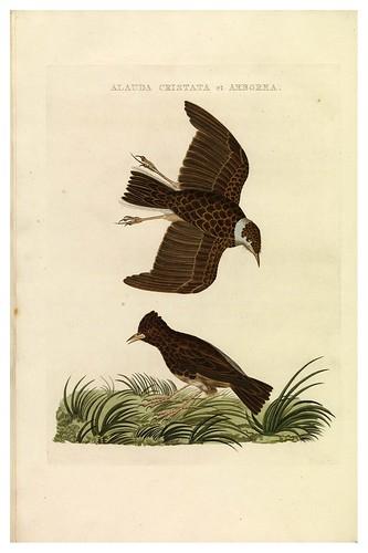 005-Alondra- Nederlandsche vogelen- Nationale bibliotheek van Nederland