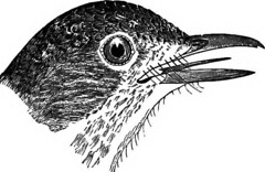 """Image from page 132 of """"Birds of Michigan"""" (1893)"""
