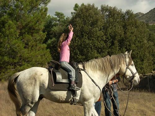 taller caballo