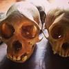Caveras de macacos #macaco #monkey #skull #cavera #bonito #ms #matogrossodosul