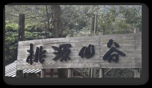 桃園復興鄉-拉拉山-桃源仙谷-鬱金香 (2)