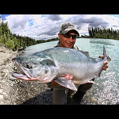 AlaskaFlyFishingJobs.com Guide needed from now through September 30 at Kenai Cache Outfitters. See www.alaskaflyfishingjobs.com for qualifications an to apply. #flyfishing #sockeye #alaska #kenaicacheoutfitters #alaskaflyfishingjobs